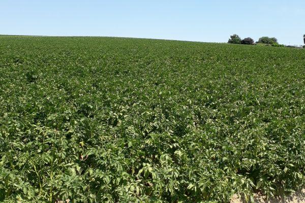 Op stap met Engelse aardappeltelers door Nederland en België