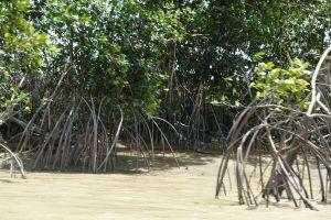 Suriname 9 maart