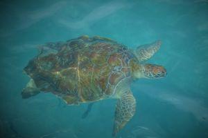 Schildpadden bekijken bij Westpunt