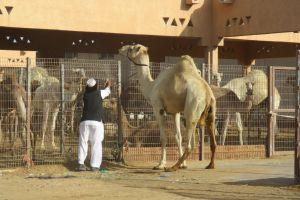 op de kamelenmarkt