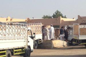 Op de kamelenmarkt in Al Ain
