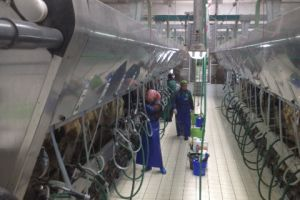Moderne melkstal bedrijf Anton Smits