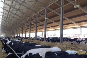 Bezoek koeienbedrijf Kees Huizinga