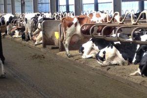 Bezoek Oekrains melkveebedrijf met robots om te melken