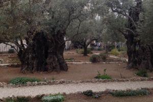 Hof van Olijven