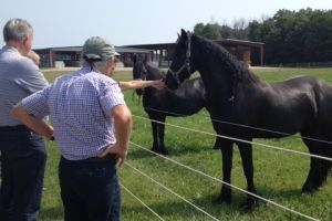 paarden klaas v.d. ploeg michigan