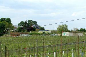 wijn in oostduitsland